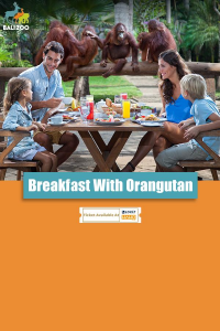 Breakfast with Orangutan