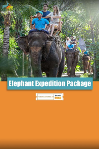 Elephant Expedition Package